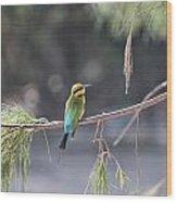Rainbow Bee-eater V4 Wood Print