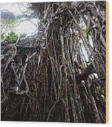 Rainforest Tree Wood Print