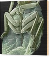Red Bug, Sem Wood Print
