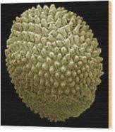 Red Campion Seed, Sem Wood Print