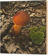 Red Caped Mushroom 3 Wood Print