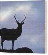 Red Deer Stag Wood Print by Duncan Shaw