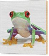 Red Eyed Frog (agalychnis Callidryas) White Background Wood Print