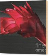 Red Ginger Alpinia Purpurata Flower Wood Print