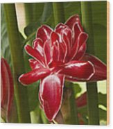 Red Ginger Lily Wood Print
