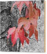 Red Leaves Wood Print
