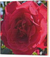 Red Rose Wood Print by Saifon Anaya