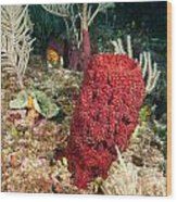 Red Sponge Wood Print