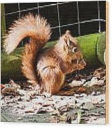Red Squirrel Wood Print