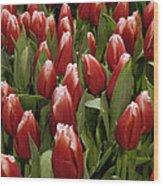 Red Tulip Heaven Wood Print