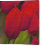 Red Tulips In Holland Wood Print