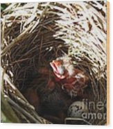 Red-winged Blackbird Babies And Egg Wood Print