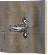 Rednecked Phalarope Wood Print