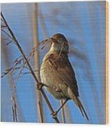 Reed Warbler Wood Print