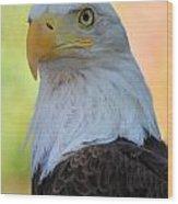 Regal Eagle Wood Print