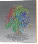 Ribosomal Subunit, Molecular Model Wood Print
