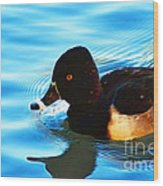Ringbill Duck Wood Print