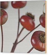 Rose Hips Rosa Rugosa Wood Print