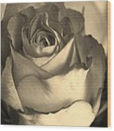 Rose In Sepia Wood Print