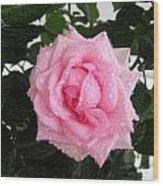 Rose With Droplets And Green Leaves Wood Print