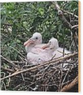 Roseate Spoonbill Chicks Wood Print