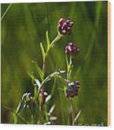 Rosy Pussytoes Wildflowers At Lake Irwin Wood Print