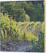 Rows Of Grapevines At Sunset Wood Print