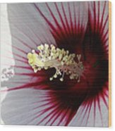 Ruby And White Hibiscus Wood Print