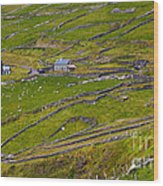Rural Landscape On Dingle Peninsula Wood Print