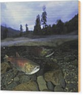 Salmon, Clayoquot Sound, Vancouver Wood Print