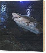 Sand Tiger Shark, Blue Zoo Aquarium Wood Print