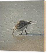 Sandpiper Hunting On Assateague Island Maryland Wood Print