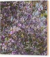 Saucer Magnolia Or Tulip Tree Magnolia X Soulangeana Wood Print