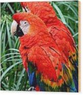 Scalet Macaw Wood Print