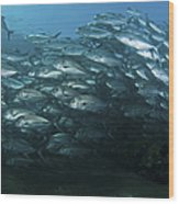 School Of Trevally Swimming By, Bali Wood Print