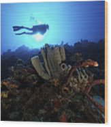 Scuba Diver Swims By Some Large Sponges Wood Print