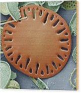 Sea Cucumber Plate Wood Print by Steve Gschmeissner