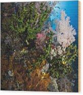 Sea Fan On Soft Coral In Raja Ampat Wood Print