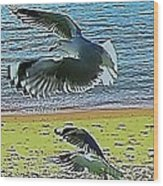 Sea Gulls In Flight  Wood Print