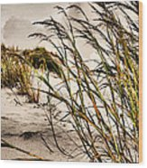Sea Oats Wood Print