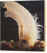 Sea Vase Wood Print