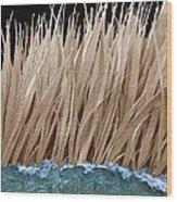 Seal Fur, Sem Wood Print