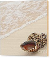 Seashell And Ocean Wave Wood Print