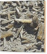 Selenite Crystals On A Dried Lake Bed Wood Print