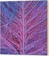 Sem Of Eastern Bluebird Feathers Wood Print