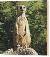 Sentinel Meerkat Wood Print