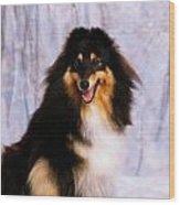 Shetland Sheepdog Portrait Of A Dog Wood Print