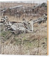 Short Eared Owl In Flight Wood Print