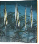 Shrimpfish Wood Print