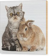 Silver Tabby Cat And Lionhead-cross Wood Print